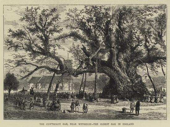 The Cowthorpe Oak, Near Wetherby, the Oldest Oak in England--Giclee Print