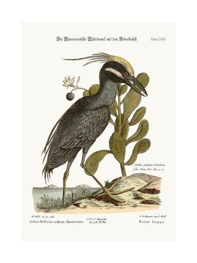 The Crested Bittern, 1749-73-Mark Catesby-Giclee Print