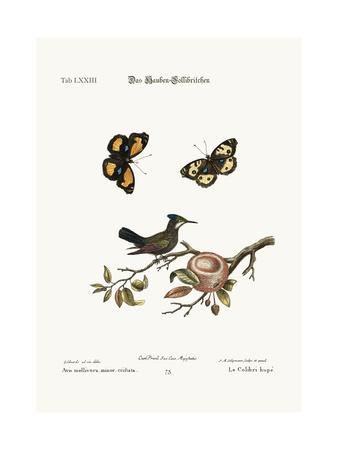 The Crested Hummingbird, 1749-73-George Edwards-Giclee Print