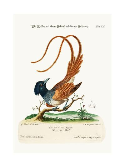 The Crested Long-Tailed Pye, 1749-73-George Edwards-Giclee Print