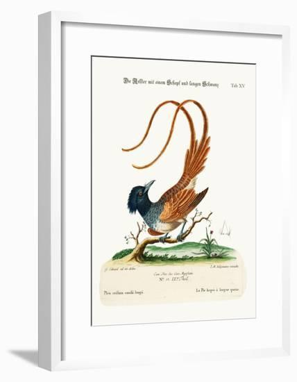 The Crested Long-Tailed Pye, 1749-73-George Edwards-Framed Giclee Print