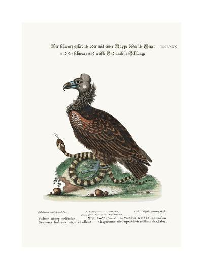 The Crested or Coped Black Vulture, and the Black and White Indian Snake, 1749-73-George Edwards-Giclee Print
