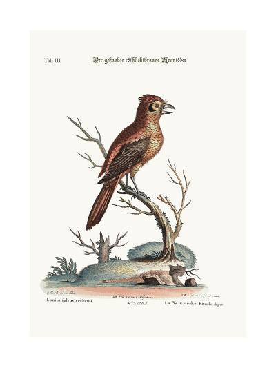 The Crested Red or Russit Butcher-Bird, 1749-73-George Edwards-Giclee Print