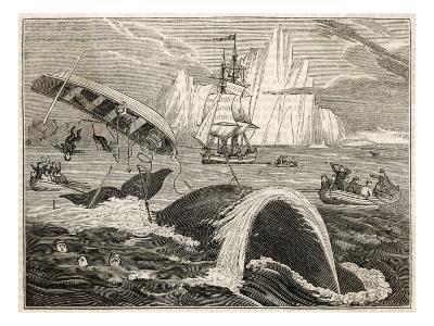 The Crew in Danger a Small Whaling Vessel Is Overturned by a Whale--Giclee Print