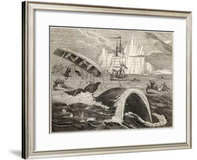 The Crew in Danger a Small Whaling Vessel Is Overturned by a Whale--Framed Giclee Print