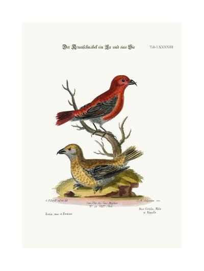 The Cross-Bills, Cock and Hen, 1749-73-George Edwards-Giclee Print