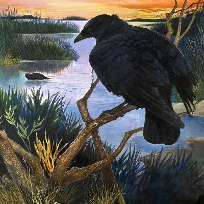 The Crow, Illustration from 'The Black Shadow', by F. St Mars, 1966-G^ W Backhouse-Giclee Print
