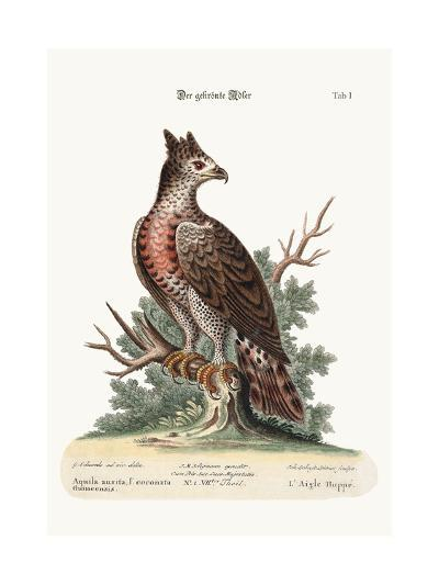 The Crowned Eagle, 1749-73-George Edwards-Giclee Print