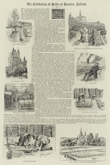 The Cultivation of Bulbs at Haarlem, Holland--Giclee Print