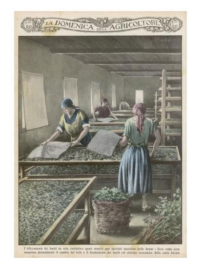 The Cultivation of Silk Worms in Italy--Giclee Print