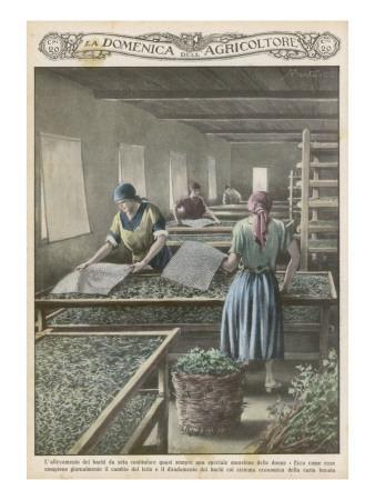 https://imgc.artprintimages.com/img/print/the-cultivation-of-silk-worms-in-italy_u-l-p9w4wv0.jpg?p=0