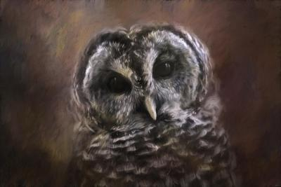 The Curious Owl-Jai Johnson-Giclee Print