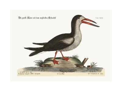 The Cut Water, 1749-73-Mark Catesby-Giclee Print