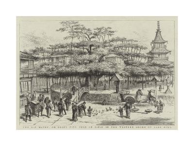 The Dai Matsu, or Giant Pine Tree of Japan on the Western Shore of Lake Biwa--Giclee Print