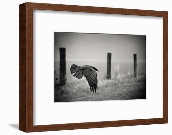 the day of the Raven-holger droste-Framed Photographic Print
