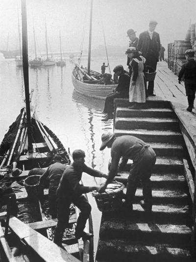 The Day's Catch is Unloaded from a Fishing Boat at Staithes Yorkshire-Graystone Bird-Photographic Print