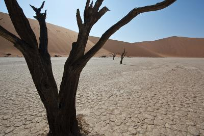 The Dead Acacia Trees of Deadvlei at Sunrise-Alex Saberi-Photographic Print