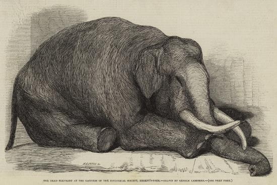 The Dead Elephant at the Gardens of the Zoological Society, Regent'S-Park-George Landseer-Giclee Print