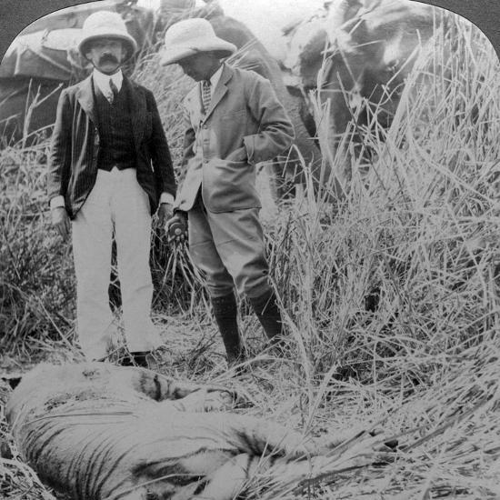 The Dead Maneater, Behar Jungle, India, C1900s-Underwood & Underwood-Photographic Print
