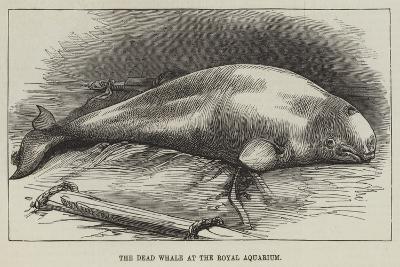 The Dead Whale at the Royal Aquarium--Giclee Print