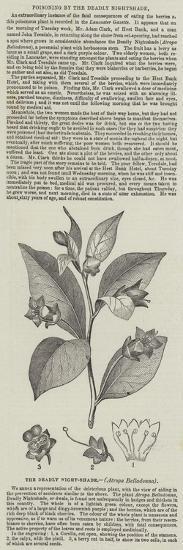 The Deadly Night-Shade, (Atropa Belladonna)--Giclee Print