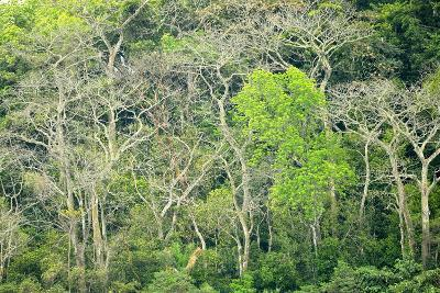 The Dense Tropical Jungle of Barro Colorado Island-Jonathan Kingston-Photographic Print