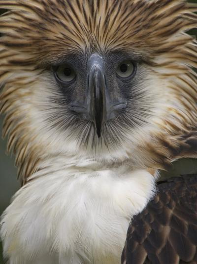 The depth and narrowness of the eagles' bill is unique among birds-Klaus Nigge-Photographic Print