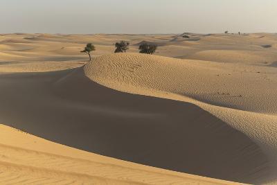 The Desert Near Liwa, Abu Dhabi, United Arab Emirates, Middle East-Angelo Cavalli-Photographic Print