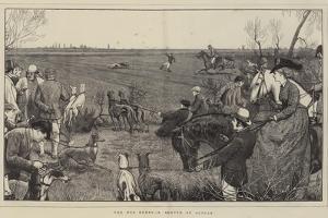 The Dog Derby, a Sketch at Altcar