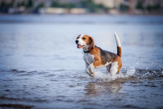 The Dog in the Water, Swim, Splash- dezi-Photographic Print