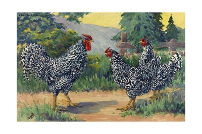 The Dominique Breed Was Named in a U.S. Poultry Show in 1849-Hashime Murayama-Giclee Print