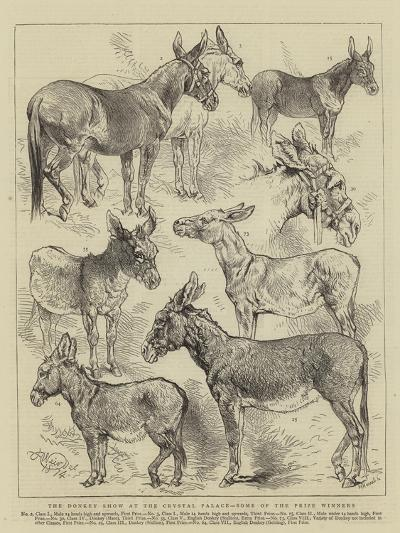 The Donkey Show at the Crystal Palace, Some of the Prize Winners-Harrison William Weir-Giclee Print