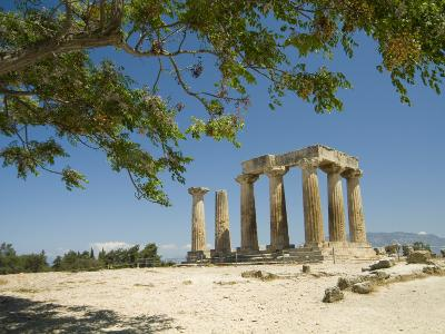 The Doric-Style 550 Bc Temple of Apollo and a Branch of an Olive Tree-Richard Nowitz-Photographic Print