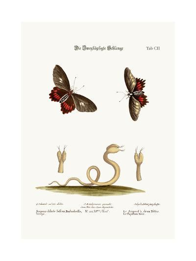 The Double-Headed Snake. the Black Butterflies, 1749-73-George Edwards-Giclee Print