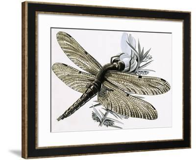 The Dragonfly-R. B. Davis-Framed Giclee Print