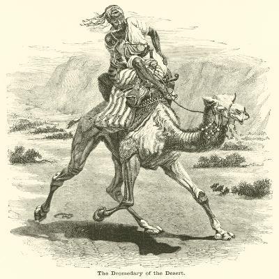 The Dromedary of the Desert--Giclee Print
