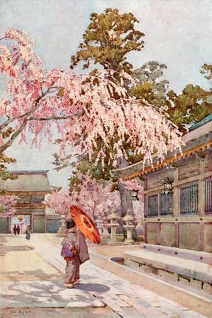 https://imgc.artprintimages.com/img/print/the-drooping-cherry_u-l-pp8x5z0.jpg?p=0
