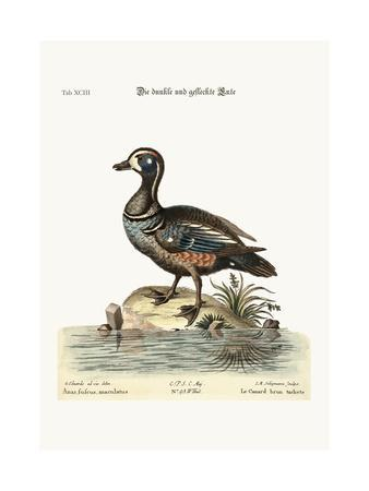 https://imgc.artprintimages.com/img/print/the-dusky-and-spotted-duck-1749-73_u-l-pulagq0.jpg?p=0