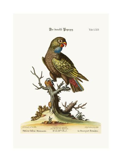 The Dusky Parrot, 1749-73-George Edwards-Giclee Print