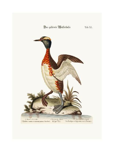 The Eared or Horned Dobchick, 1749-73-George Edwards-Giclee Print