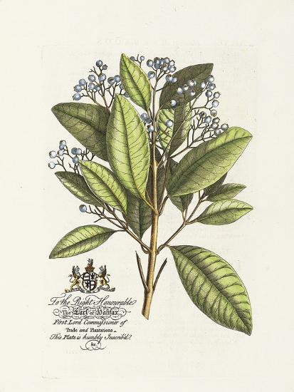 The Earl Of Halifax Botanical-Georg Ehret-Premium Giclee Print