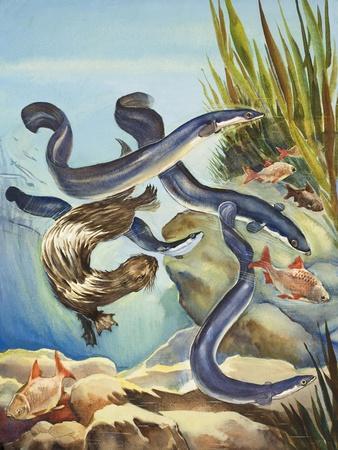 The Eel's Amazing Journey-G^ W Backhouse-Premium Giclee Print
