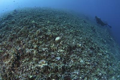 The Effects of Reef Bombing by Dynamite Fishermen, Komodo National Park, Indonesia-Stocktrek Images-Photographic Print