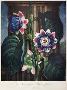 Thornton: Passion-Flower by The Elder Hopwood James