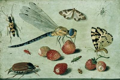 A Dragon-Fly, Two Moths, a Spider and Some Beetles, with Wild Strawberries, 17th Century