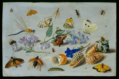 Butterflies and Other Insects, 1661