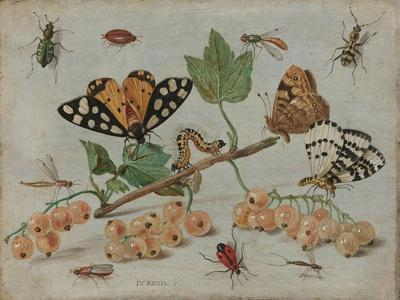 Insects and Fruit, c.1660-5