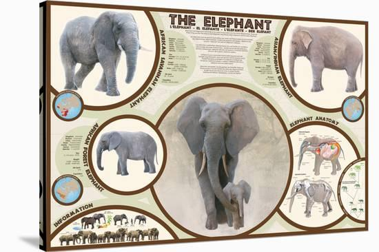 The Elephant--Stretched Canvas Print