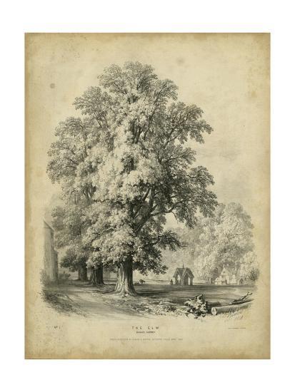 The Elm-George Barnard-Art Print