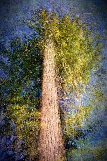 The Ent-Ursula Abresch-Photographic Print